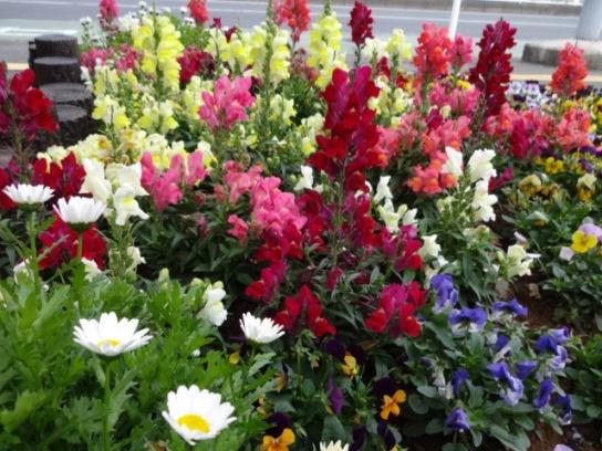 区役所前の花壇
