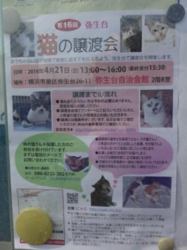 猫譲渡会の掲示広告