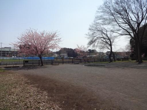 いずみ桜広場