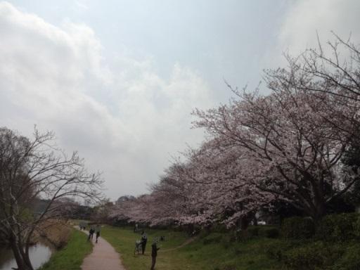 和泉川親水広場