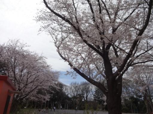 桜・泉中央公園
