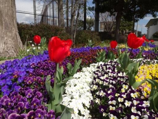 中田中央公園花壇