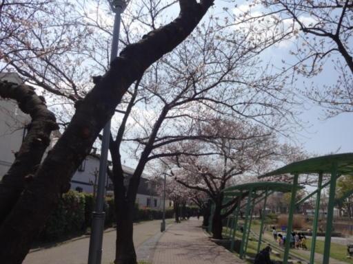 桜2021-地蔵原